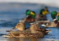 Национальный парк «Смоленское поозерье» проводит конкурс для школьников