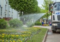 В Смоленске с клумб пропадают цветы