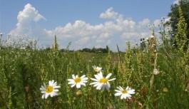 Неделя в Смоленске начинается с жаркой погоды