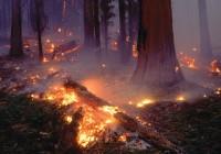 В Смоленской области установлен высокий уровень пожарной опасности