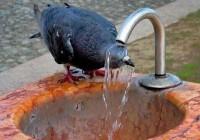 Смоленск снова погрузится в жару