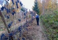 Юрий Чугуев может стать Почетным гражданином Смоленска