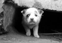 В Смоленске продолжается акция по сбору средств на вольеры для бездомных щенков.