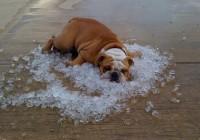 В пятницу в Смоленск придет 30-градусная жара