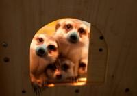 Тайны семейной жизни обитателей зоопарка раскроют смолянам
