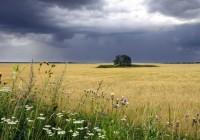 Синоптики обещают смолянам дожди и грозы