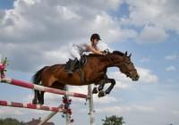 В Смоленске пройдут соревнования по конкуру