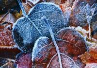 В пятницу заморозки в Смоленской области усилятся