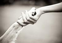 Смоляне могут протянуть руку помощи «городским лапам»