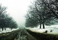 Слякоть сменила снежное ненастье в Смоленске