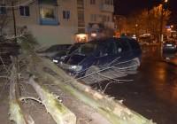 На улице Николаева в Смоленске дерево упало на припаркованное авто