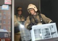 Опубликовано видео спасения животных из горящего зоомагазина в Смоленске