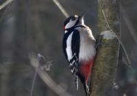 Любители фотографирования птиц соберутся под Смоленском