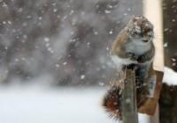 В Смоленск спешат холодные воздушные массы