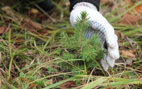 Красный Бор под Смоленском хотят сделать охраняемой природной территорией
