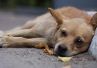 На Блонье в Смоленске раскидали отраву для собак