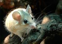 Смоленский зоопарк приглашает на World  Pets Day