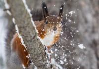 В четверг в Смоленске будет идти мокрый снег