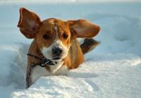 Владельцев собак в Смоленской области предупреждают об опасности