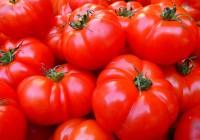 17 тонн подозрительных помидор уничтожены Смоленской области
