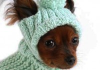 Смоленский приют для животных «Верность» просит помочь с дровами