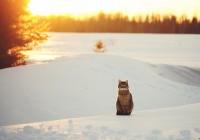 В Смоленске сохраняется морозная погода