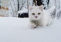Смоленск заморозит