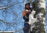 Кошек, собак, лосенка и других животных спасали в Смоленске в 2016 году