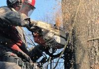 Два автобусных маршрута изменятся в Смоленске на время сноса аварийных деревьев