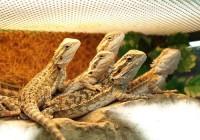 Мини-динозавры поселились в Смоленском зоопарке