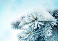 В Смоленске может похолодать до -8 градусов