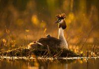 «Первый птенец» принес смоленскому фотографу победу на конкурсе National Geographic