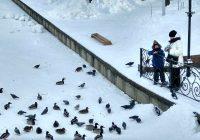 Власти Смоленска пообещали подкармливать уток в Лопатинском саду