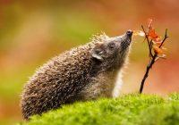 Зайцевы и Волковы смогут бесплатно посетить Смоленский зоопарк
