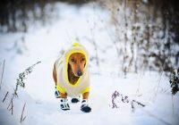 В выходные смолян ждет морозная и снежная погода