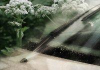 Борщевиком по стеклу: интервью с создателями безопасной «незамерзайки» из опасного сорняка