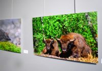 Бесплатная экологическая фотовыставка открылась в Смоленске