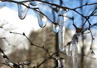 В первый день весны в Смоленске потеплеет до +8°С