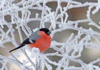 В Смоленске резко похолодает перед выходными