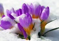 Апрель обещает растопить снег в Смоленске