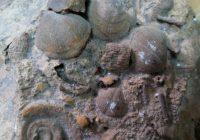 Окаменелые останки морских обитателей нашли в Дорогобужском районе