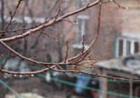 Во вторник в Смоленске ожидаются дожди