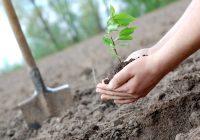 В Год экологии в Смоленске появится новая аллея