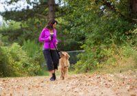 В Смоленске оборудуют специальную  площадку для выгула собак