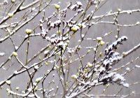 В выходные в Смоленск вернутся холода