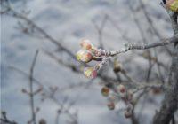 Пасхальные выходные в Смоленске будут прохладными
