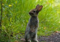 В центре Смоленска заметили зайца