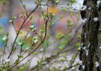 Заморозки и снег придут в Смоленск на этой неделе