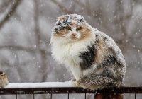 Перед 9 мая в Смоленске погода резко испортится