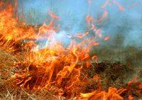 В Смоленской области продолжают палить траву